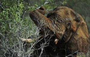 Week in Wildlife: A collared elphant who was sedated by Kenya Wildlife Services
