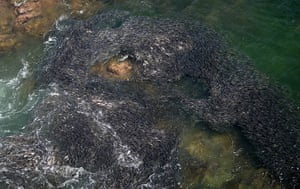 Week in Wildlife: A large school of fish swims near the coast of Acapulco, Mexico