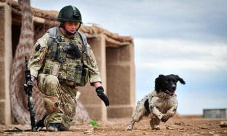 Record-breaking bomb dog