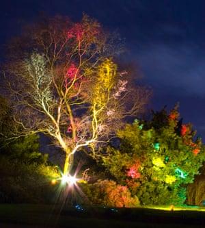 Inverleith Park tree lit up
