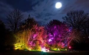 Inverleith Park lighting bush