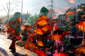 Spring festivals: People are reflected in the window of a shop selling goldfish in Tehran