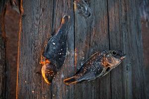 FTA: Jim Lo Scalzo  : Dead tilapia lit by the morning sun