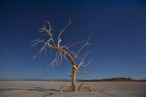 FTA: Jim Lo Scalzo  : A dead oak tree glows under a full moon in a salt pan