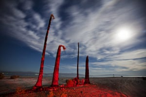 FTA: Jim Lo Scalzo  : The trunks of dying palm trees rise on the shores of Salton Sea Beach