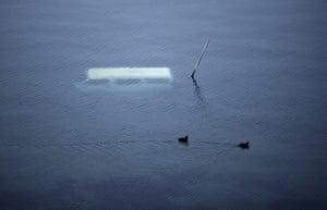 Japan aftermath: Ducks swim past a submerged vehicle in Yamada