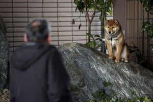 Japan : A man talks to an evacuated dog at an evacuee centre in Fukushima