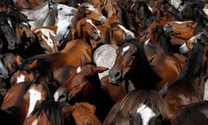 Wild horses in Sabucedo, Spain