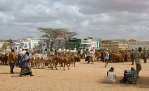 Pastoralism in crisis: Through horn of Africa : Kenya