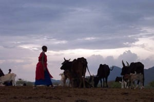 Pastoralism in crisis: Through horn of Africa : Masai Kenya