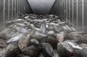Japan nuclear crisis: Frozen fish imported from Japan