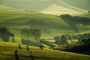 South Downs: South Downs, Telscombe