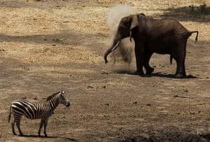 week in wildlife: Elephant Census in Kenya