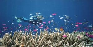 week in wildlife: coral reefs