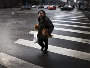 from the agencies: A man carries his dogs over a pedestrian crossing