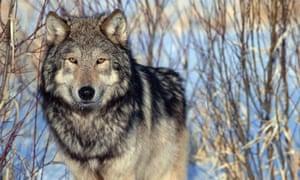 republicans attack obama environmental protection