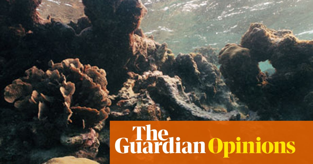 Case for saving coral reefs is economic as well as