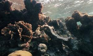 """Bleached"" coral reef off Caye Caulker, Belize"