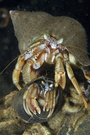 Paul Naylor: Great British Marine Animals