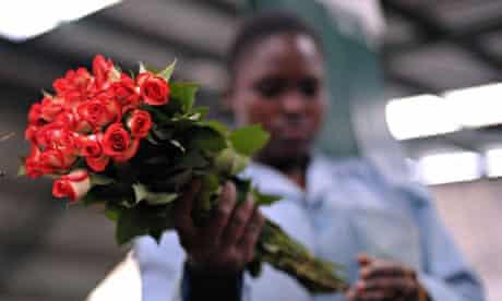 A flower farm worker in Naivasha, Kenya