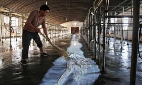 China millk industry