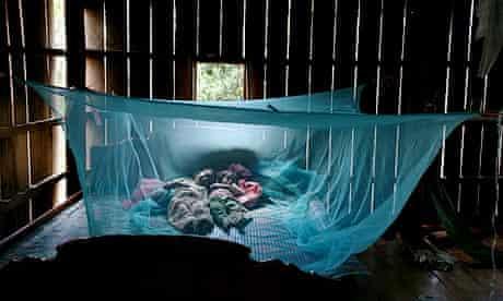 Cambodia Siblings sleep mosquito net