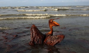 bp and the gulf of mexico oil spill case study solution