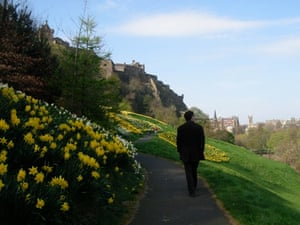 Daffodils and a Castle