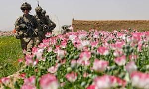 poppy field in Afghanistan