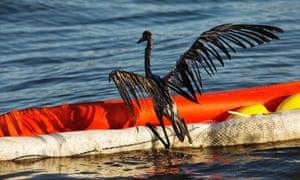oil spill law