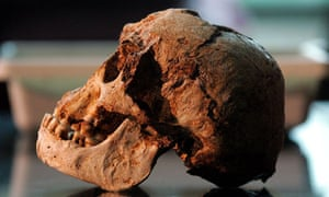 The skull of the Flores 'Hobbit'