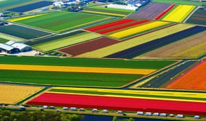 24 hours in pictures: Fields of tulips