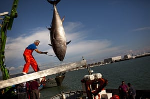 24 hours: An Almadraba tuna in Spain