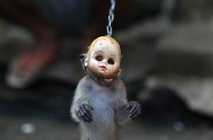 24 hours: A trained monkey in Jakarta