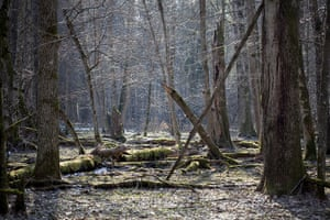 Bialowieza Forest: the last remaining primeval forest in lowland Europe