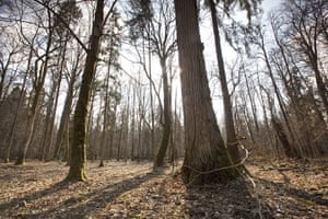 Bialowieza Forest: the last remaining primeval forest in European lowlands