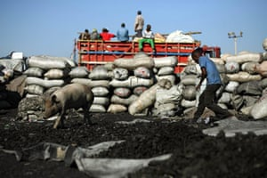 Haiti fuel: Charcoal production in Haiti