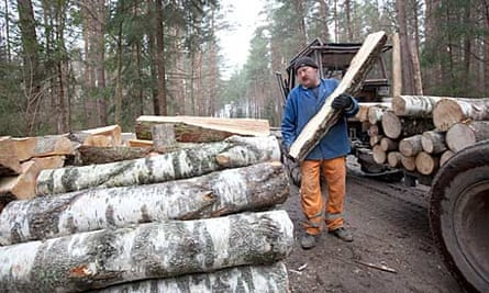 Logging in an unprotected part of the Bialowieza forest