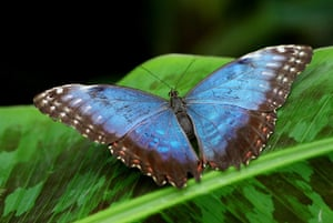 Butterflies Costa Rica And Their Natural History