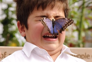 Sensational Butterflies: Sensational Butterflies exhibition at Natural History Museum