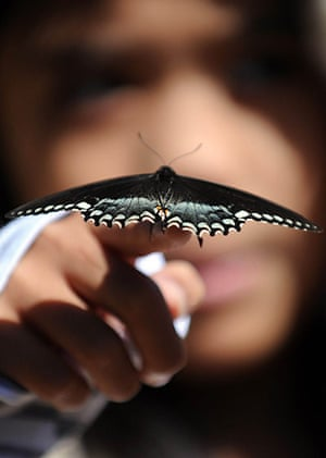 24 Hours in Pictures: A young girl looks at a butterfly at the Los Angeles Natural History Museum