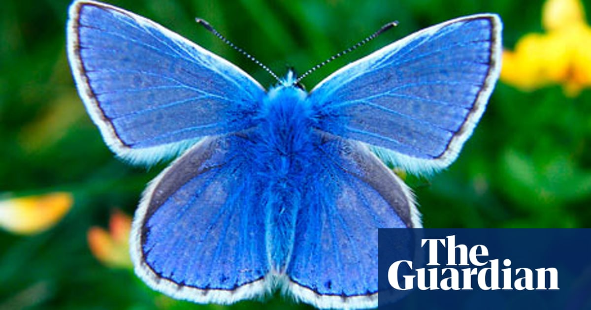 cd49de125 Why British wildlife lovers have such a soft spot for butterflies ...