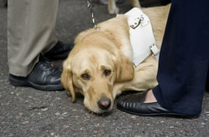 "Hardest Hit march: ""Harvey"" the guide dog"