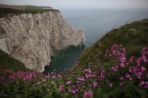 Gannet Colony: Gannets At Bempton Cliffs, England's Only Mainland Gannet Colony