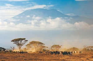 Disappearing world: Masai herdsmen with Kilimanjaro looming on the horizon.
