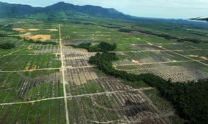 Cleared forest, Borneo