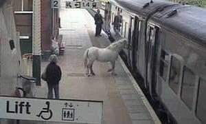 CCTV of horse being taken on train