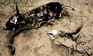 remains of livestock in Niger, which is prone to recurring drought