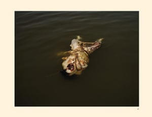 Taryn Simon: Corpse of a person with leprosy floating in the Ganges River