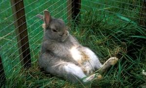 Losing A Pet Rabbit
